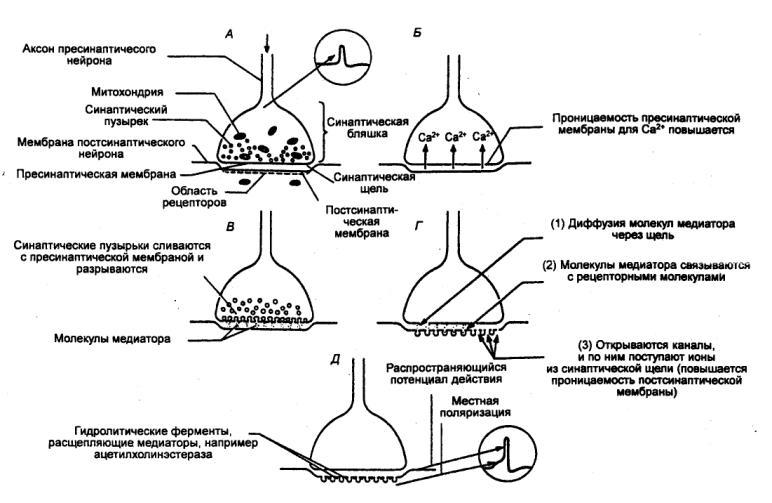 Рис. 1.35 Механизм химической