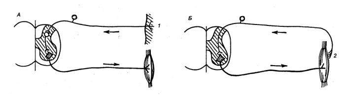 Рис. 1.46 Рефлекторные дуги