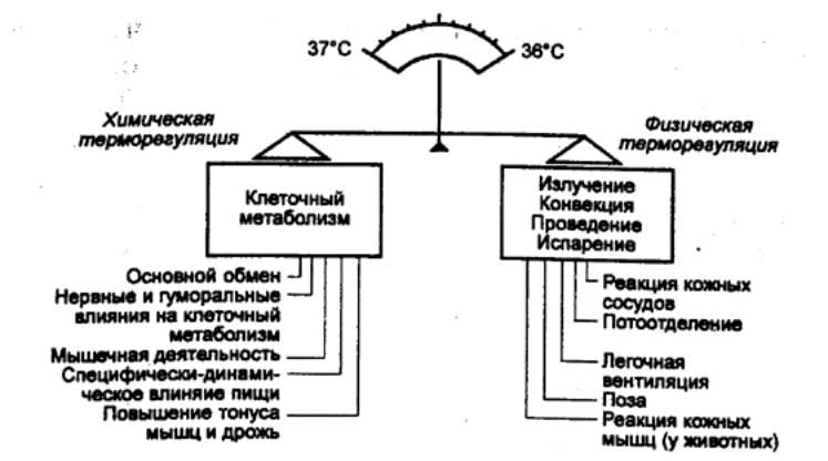 Терморегуляция