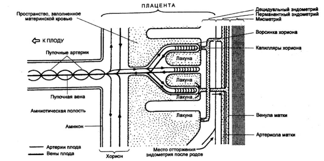 Лактоген
