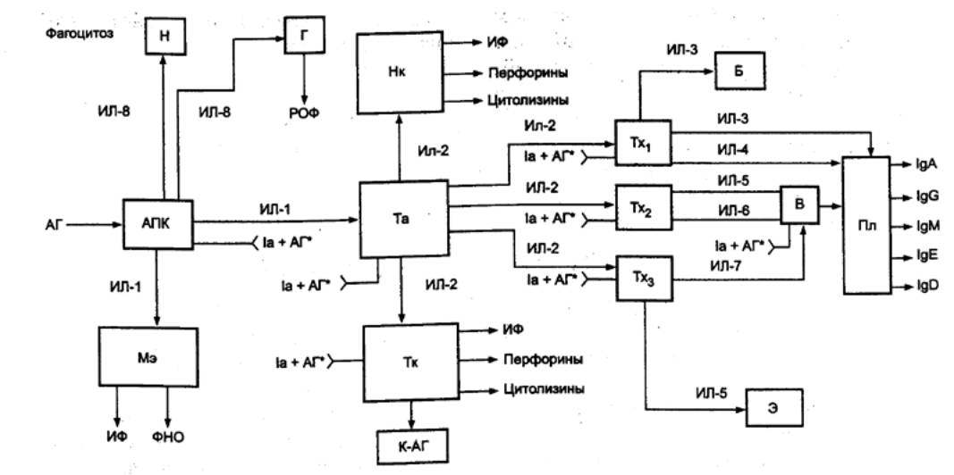 Рис. 8.57 Схема иммунного