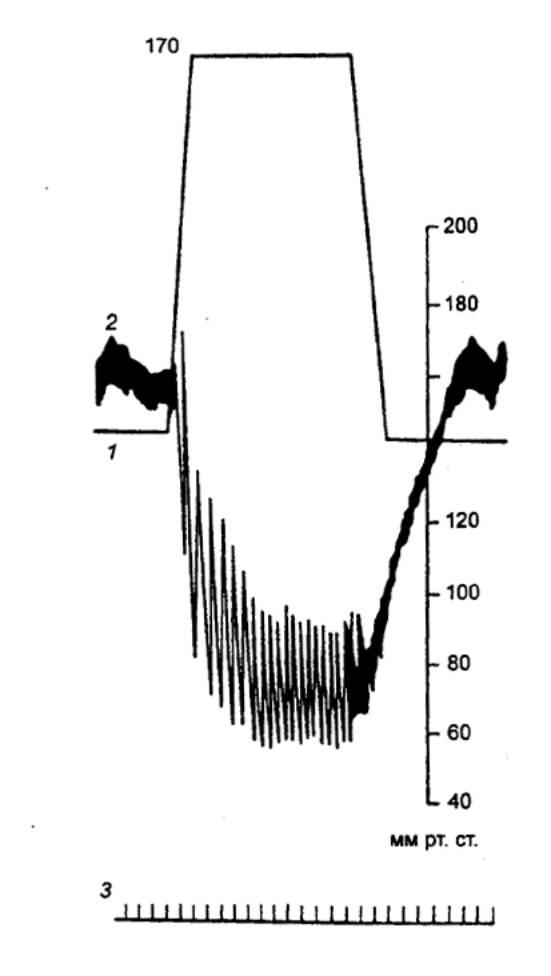Нерв сосудодвигательный